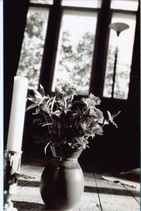 Còpia de floriespelmafinlandia