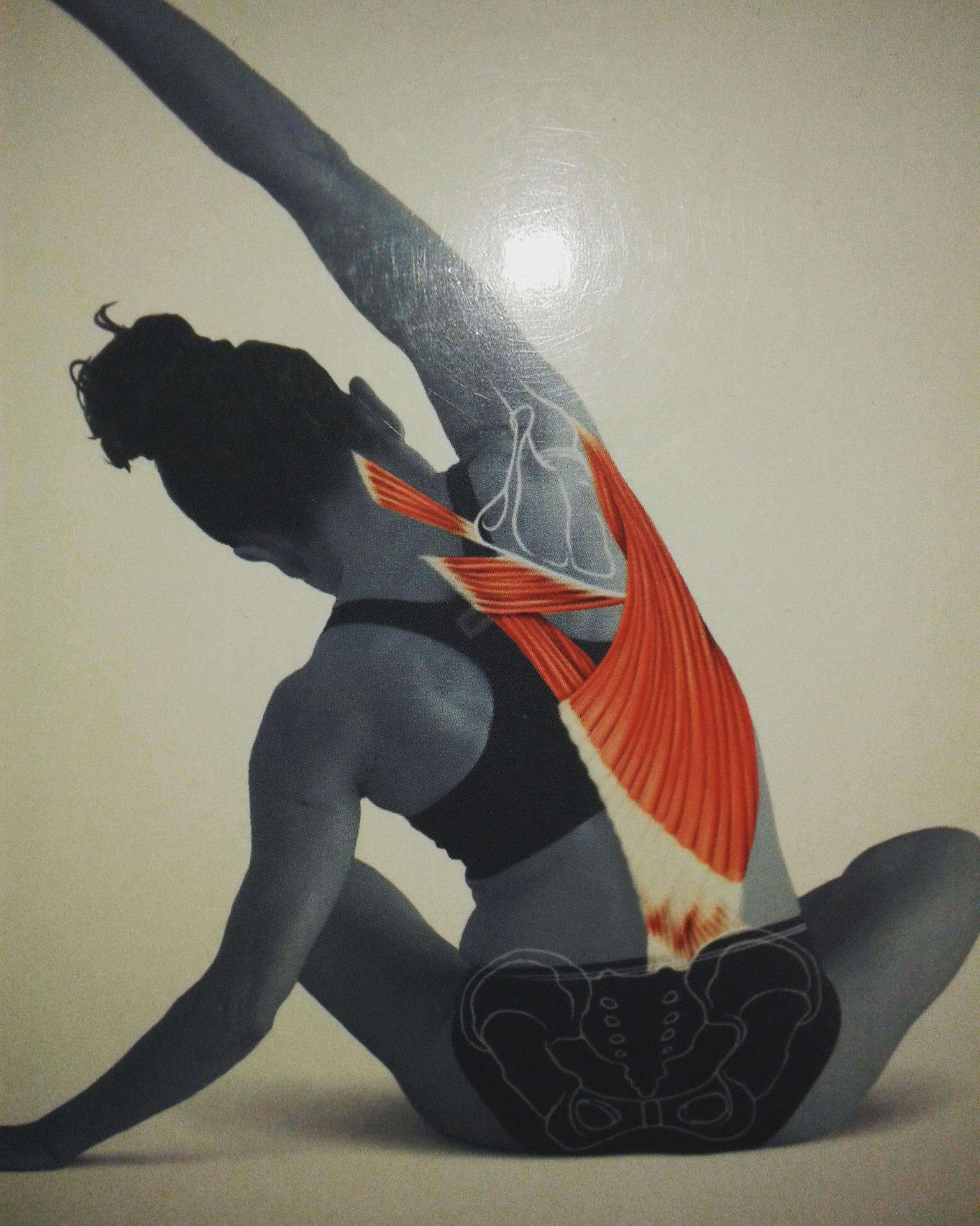 Beneficios del Yoga Pilates Barra SISTEMA DARSHAN comparados con otros sistemas y con yoga